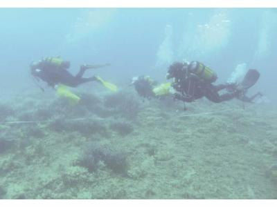 3 Scientific Diving Summer School