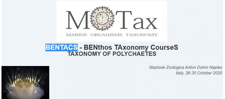 BENTACS - BENthos TAxonomy CourseS - Taxonomy of Polychaetes